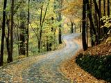 Wallpaperi Th_13648_Autumn_Road1_Percy_Warner_Park6_Nashville0_Tennessee_122_1126lo